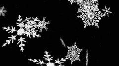 Closeup of Large winter snowflakes falling in a loop 1 - stock footage