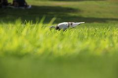 Hiding Bird Stock Photos