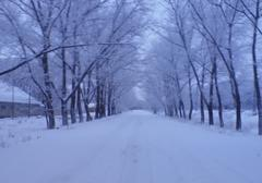 frozen road between the tree alley lead to nowhere - stock photo