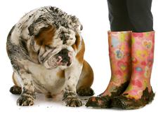 Dirty boots and dirty dog Stock Photos