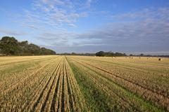 Stubble field and blue sky Stock Photos