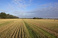 Stock Photo of stubble field and blue sky