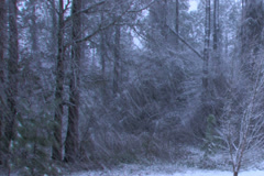 Winter snow storm on the edge of forest Stock Footage