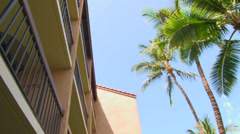 Breezy Palm Trees - stock footage