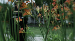 Tiger Lilies Blowing in the Breeze HD Video Stock Footage