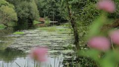 From flowers to river home follow focus shot Stock Footage