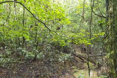 Amazonian creek, ecuador Stock Photos
