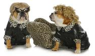 Stock Photo of diva dogs
