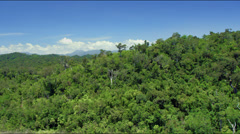 Flight along dense green tropical jungle Stock Footage