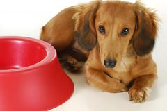 Dog waiting to be fed Stock Photos