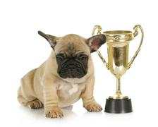 Dog winning Stock Photos
