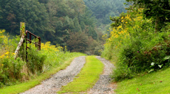 country road in mountains yellow wild flowers - stock footage