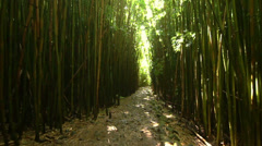 Walking In Bamboo Forest (POV) Stock Footage