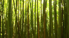 Stock Video Footage of Bamboo Background HD
