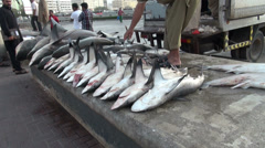 lot of dead sharks in Dubai fish market - shark finning - stock footage
