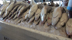 pile of dead sharks - Dubai fish market, shark finning - stock footage
