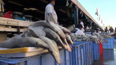 dead sharks in Dubai fish market - shark finning - stock footage
