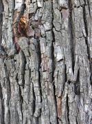 Crust Wood Stock Photos