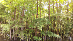 Trees, Wide angle, truck by Cypress Tree swamp Stock Footage
