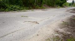 Endangered Eastern Hog-nosed Snake slithers across a road. Stock Footage