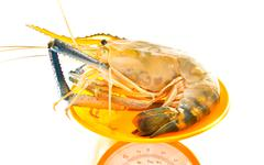 Stock Photo of fresh river prawn from the market on balance scales