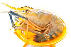 fresh river prawn from the market on balance scales - stock photo