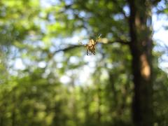 spider and the net in the forest - stock photo