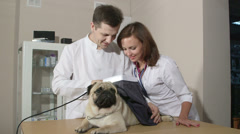 Dog Checkup At Animal Clinic Stock Footage