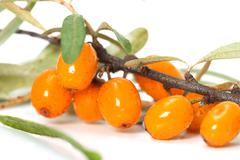 sea-buckthorn closeup - stock photo