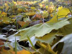 yellow fallen leaf on the autumn forest ground - stock photo