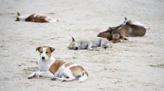 Cute asia dogs sleep on the beach Stock Footage