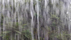 Trooppinen sade viidakossa Arkistovideo