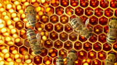 Close-up view of bees on honeycomb slow motion Stock Footage
