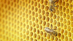 Close-up view of bees on honeycomb slow motion - stock footage