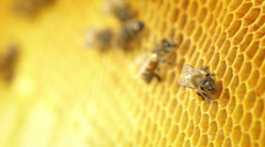 Stock Video Footage of Close-up view of bees on honeycomb slow motion
