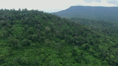 Aerial Environment Forest Canopy Trees National Park Stock Footage