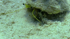 Hermit Crab walking in a coral reef Stock Footage