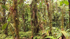 Walking through cloudforest  - stock footage