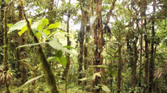 Stock Video Footage of Walking through cloudforest