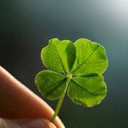 Stock Photo of four leaf clover