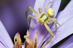 spider on flower - stock photo