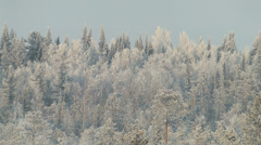 Winter in the woods Stock Footage