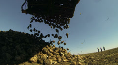 Crane Conveyor Unloading Sugar Beet Stock Footage