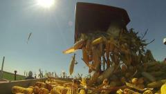 Harvesting Corn Cob - Slow Motion - stock footage