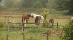 Grazing Horses Stock Footage
