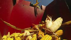 Field of Corn Being Harvested Stock Footage