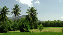 Paddy field & palms Stock Footage