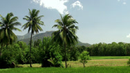 Stock Video Footage of Paddy field & palms
