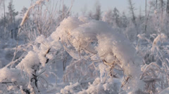 Branch covered with hoarfrost Stock Footage