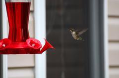Kolibri klo syöttölaite Kuvituskuvat